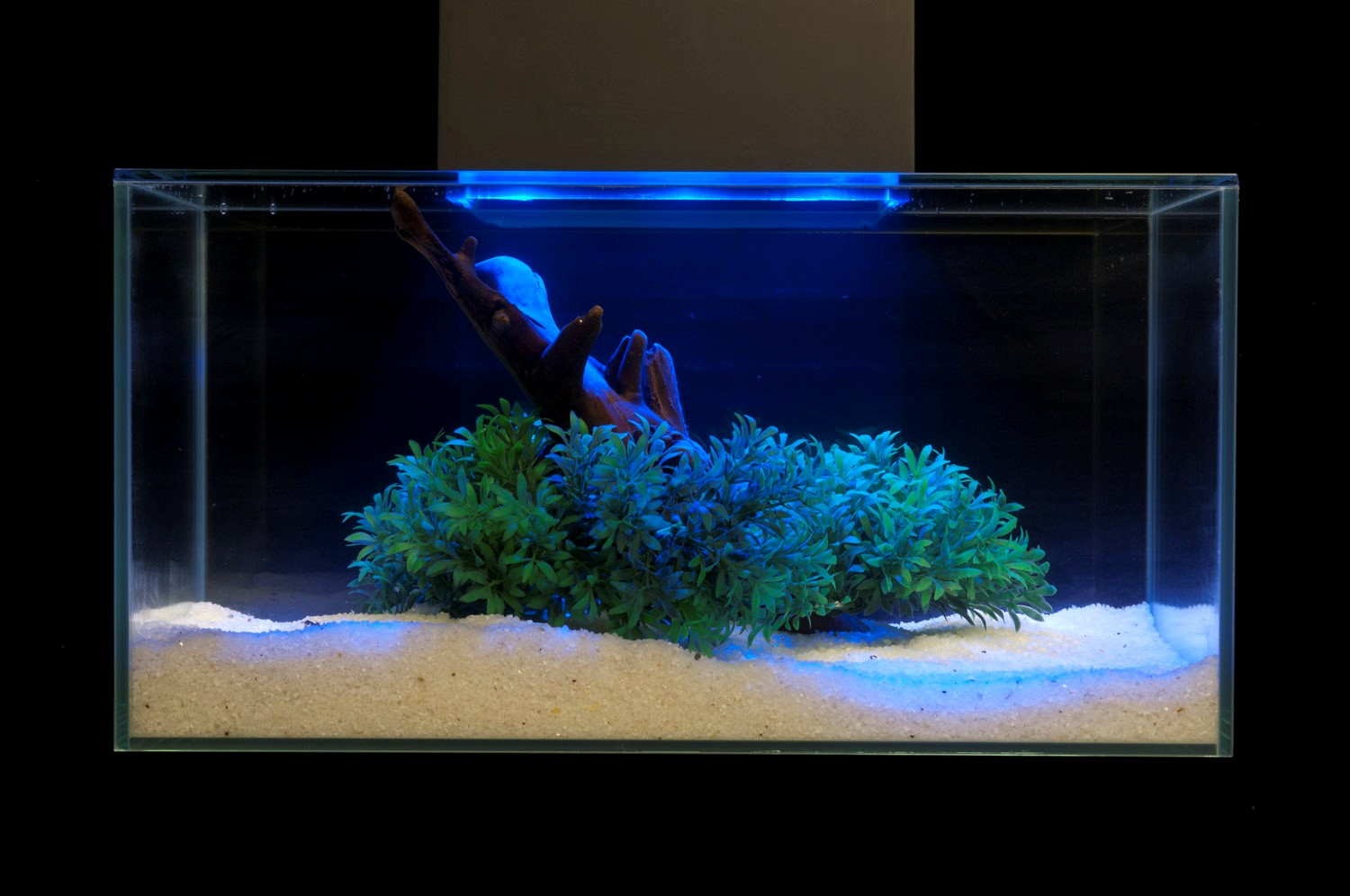 Elegant Aquascaping Pet Pitch Usa